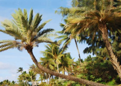 sean-tiner-palm-tree-buzz