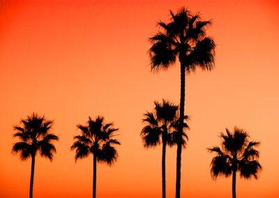 sean-tiner-palm-tree-laguna-beach