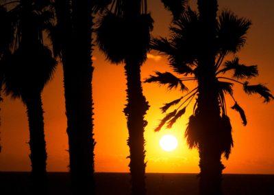 sean-tiner-photography-digital-marketing-palm-tree-sunset